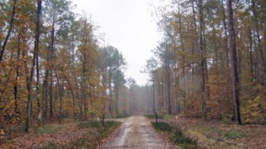 groupement-forestier